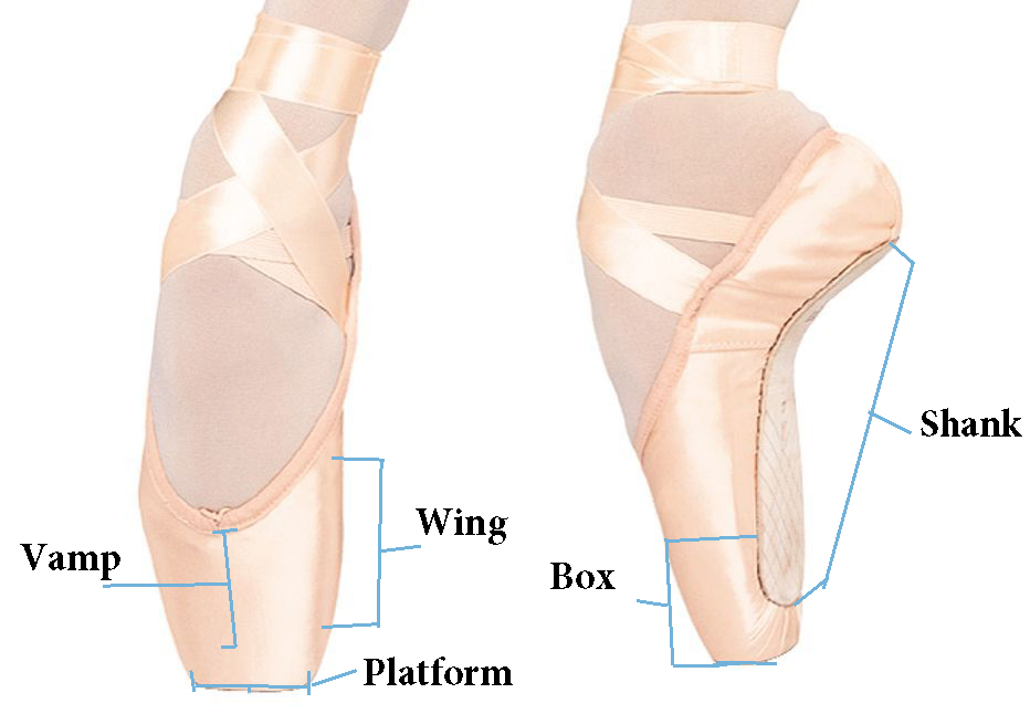 The Anatomy of a Pointe Shoe by Chicago Dance Supply